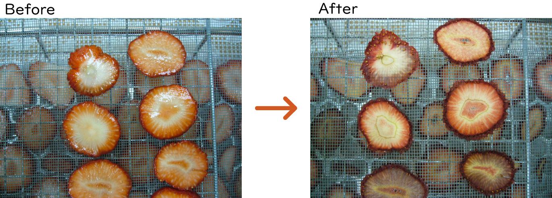 イチゴの乾燥beforeafter